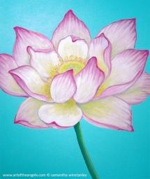 lotus-website-520